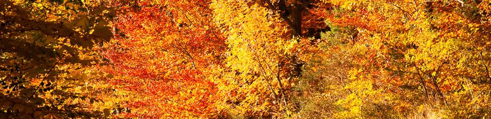 Dr. Kulus Praxisurlaub Herbst